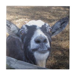 Hello Friendly Goat Tile