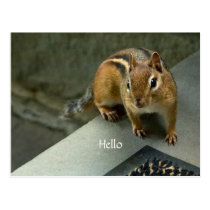 Hello from a Sweet Chipmunk Postcard
