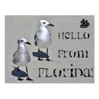 Hello from Florida! Miami seagull Post Card
