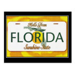 Hello From Florida Vintage Travel Postcard Post Card