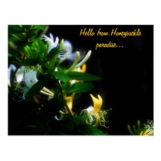 Hello From Honeysuckle Paradise... Postcard