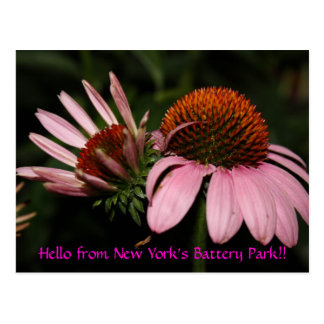 Hello from New York's Battery Park!! Postcard