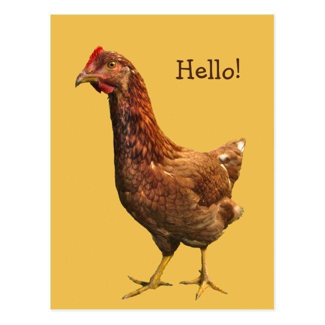 Hello from Red Hen Chicken Postcard