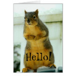 Hello from Squirrel Stationery Note Card