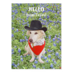 Hello from Texas! Post Card