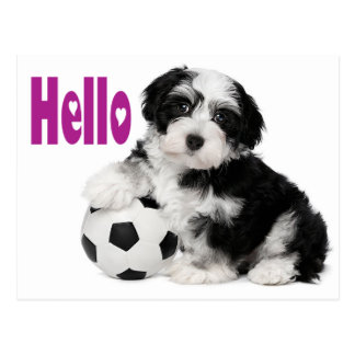Hello Havanese Puppy Dog Postcard