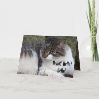 Hello? Hello? Hello! (Cat) Cards card