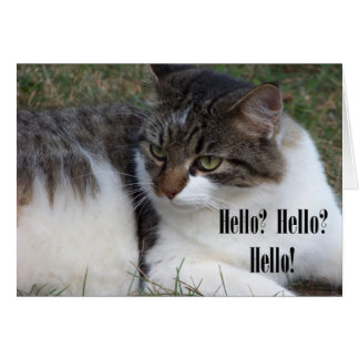 Hello Hello Hello Cat Cards