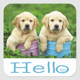 Hello / Hi  Labrador Retriever Puppy Dog Stickers