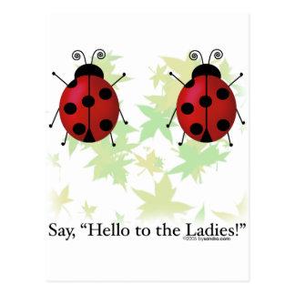 Hello Ladies Postcard