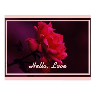 Hello, Love -- A Single Red Rose Postcard