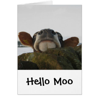 Hello Moo Card