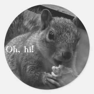 Hello, Mr Squirrel! Classic Round Sticker