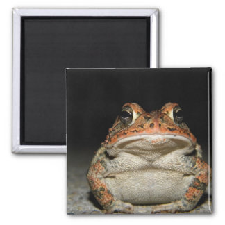 Hello Mr. Toad! Magnet