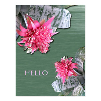 Hello Pink Flowered Bromeliad Postcard