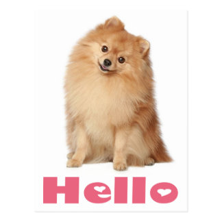 Hello Pomeranian Puppy Dog Blank Post Card