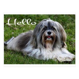 Hello Puppy Dog Postcard
