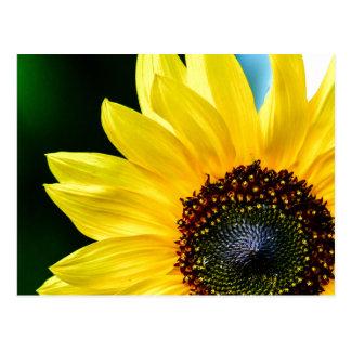 Hello Sunshine Sunflower Postcard