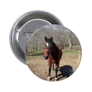 Hello There Horsey 2 Inch Round Button