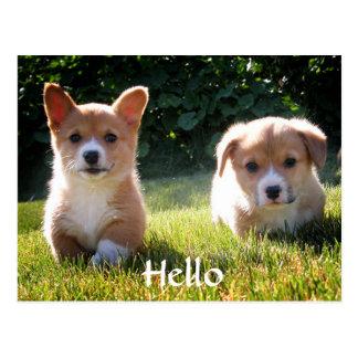Hello Welsh Pembroke Corgi Puppy Dog Postcard