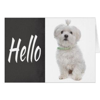 Hello White Maltese Puppy Dog Chalkboard Note Card