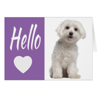 Hello White Maltese Puppy Dog Purple Heart Notecar Card