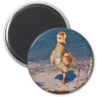 Hello World Magnet with Sandhill Crane Chick
