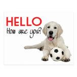 Hello Yellow Labrador Retriever Post Card Post Cards