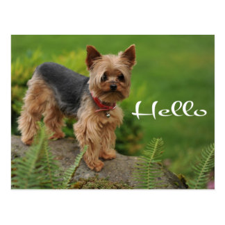 Hello Yorkshire Terrier Puppy Dog Post Card
