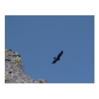 Hells Canyon Idaho Animals / Birds Aves Postcard