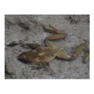 Hells Canyon Idaho Aquatic Animals / Plants Frog Postcard