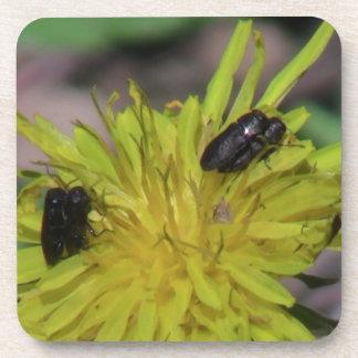 Hells Canyon Idaho Fauna Insects / Arachnids Beverage Coaster