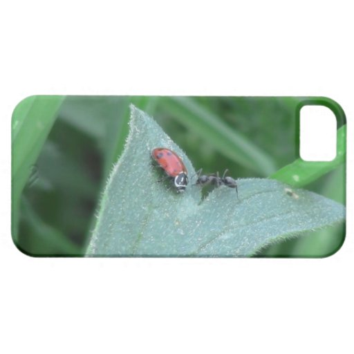 Hells Canyon Idaho Fauna Insects / Arachnids iPhone 5 Cases