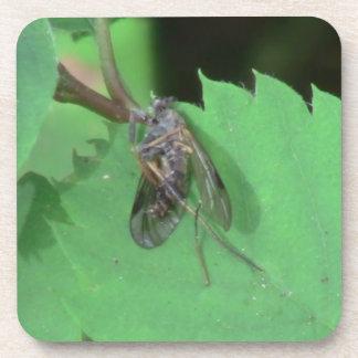 Hells Canyon Idaho Fauna Insects / Arachnids Drink Coasters