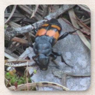 Hells Canyon Idaho Fauna Insects / Arachnids Drink Coaster
