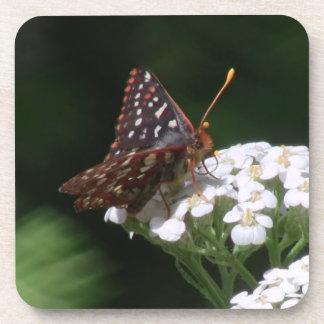 Hells Canyon Idaho Fauna Insects / Arachnids Beverage Coasters