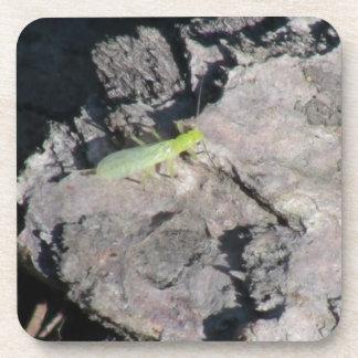 Hells Canyon Idaho Fauna Insects / Arachnids Coasters
