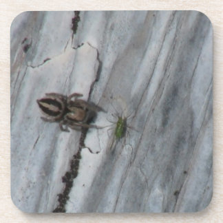 Hells Canyon Idaho Fauna Insects / Arachnids Coaster