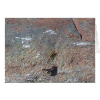 Hells Canyon Idaho Fauna Insects / Arachnids Greeting Card