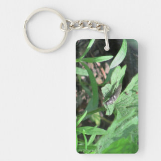 Hells Canyon Idaho Fauna Insects / Arachnids Rectangle Acrylic Key Chains