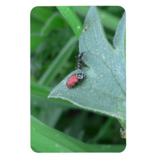Hells Canyon Idaho Fauna Insects / Arachnids Magnet