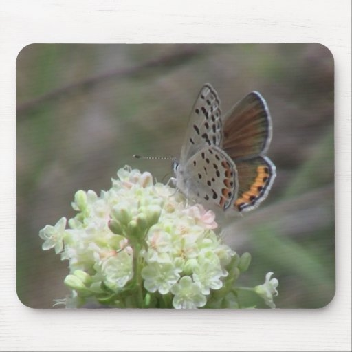 Hells Canyon Idaho Fauna Insects / Arachnids Mouse Pad
