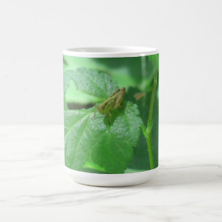 Hells Canyon Idaho Fauna Insects / Arachnids Classic White Coffee Mug