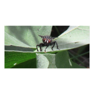 Hells Canyon Idaho Fauna Insects / Arachnids Photo Card Template