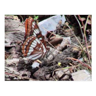 Hells Canyon Idaho Fauna Insects / Arachnids Postcard