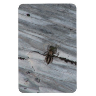 Hells Canyon Idaho Fauna Insects / Arachnids Rectangular Magnet