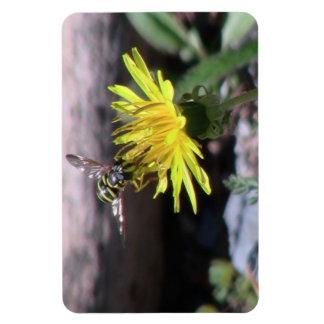 Hells Canyon Idaho Fauna Insects / Arachnids Rectangle Magnets