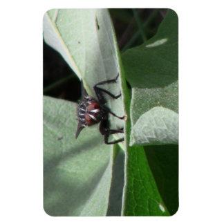 Hells Canyon Idaho Fauna Insects / Arachnids Magnet