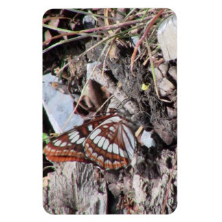 Hells Canyon Idaho Fauna Insects / Arachnids Rectangular Magnets