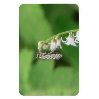Hells Canyon Idaho Fauna Insects / Arachnids Flexible Magnets